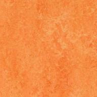 3241 Orange Sorbet